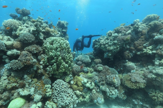scientists use sun shield to protect the great barrier reef from