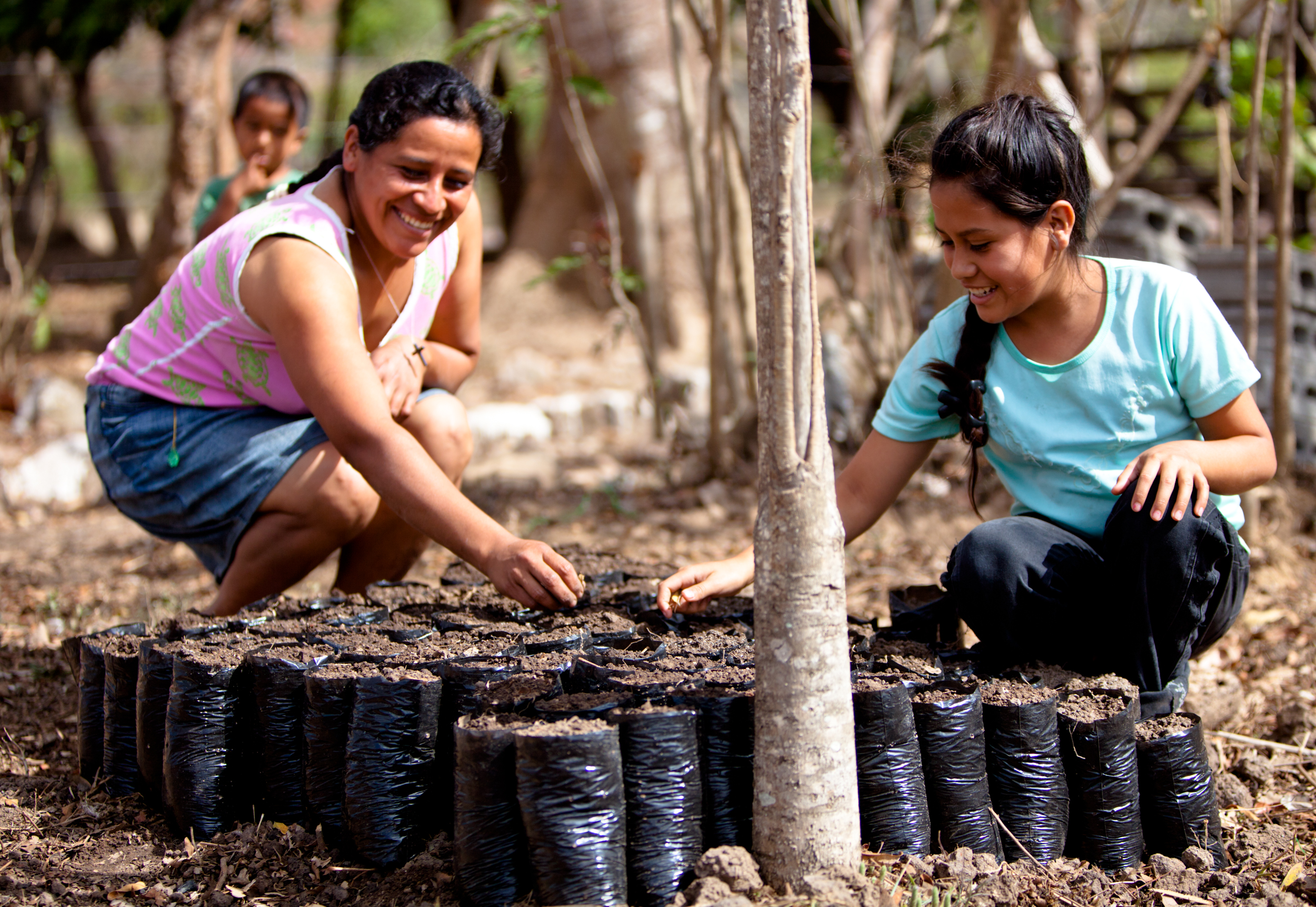 Reforestation as an investment mirabile investment dc auth ns